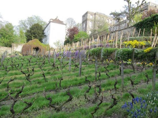 Les-Vignes-de-Montmartre-